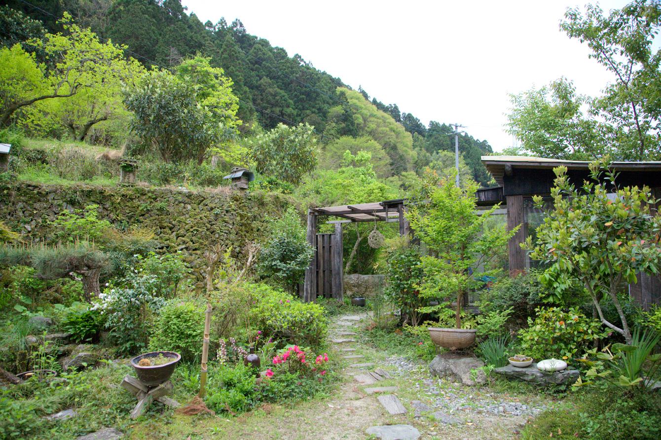 現在の庭。まるで植物園のように鳥や虫たちが集まって来る。