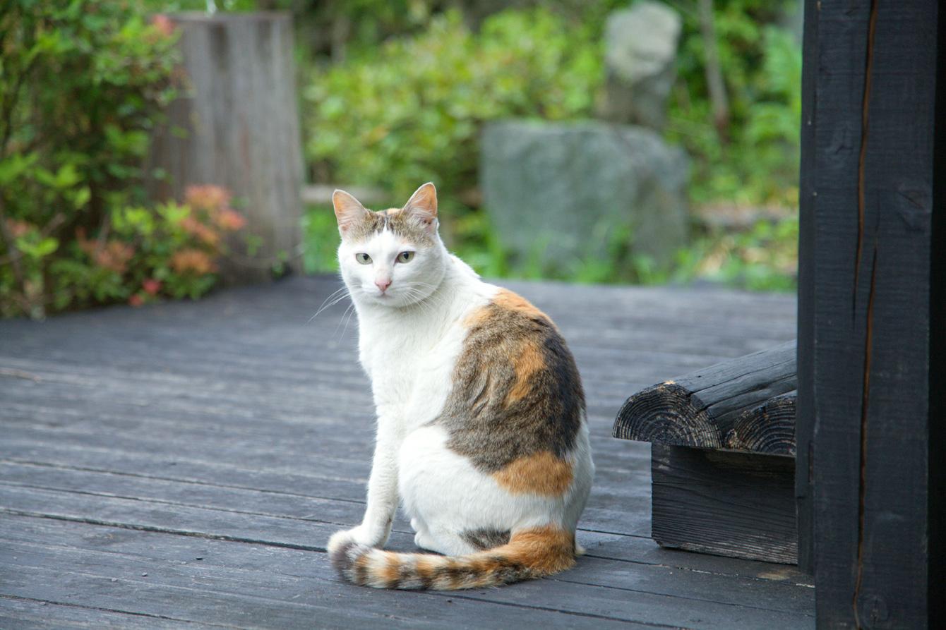 Mascot of Yamanba, Shiro.