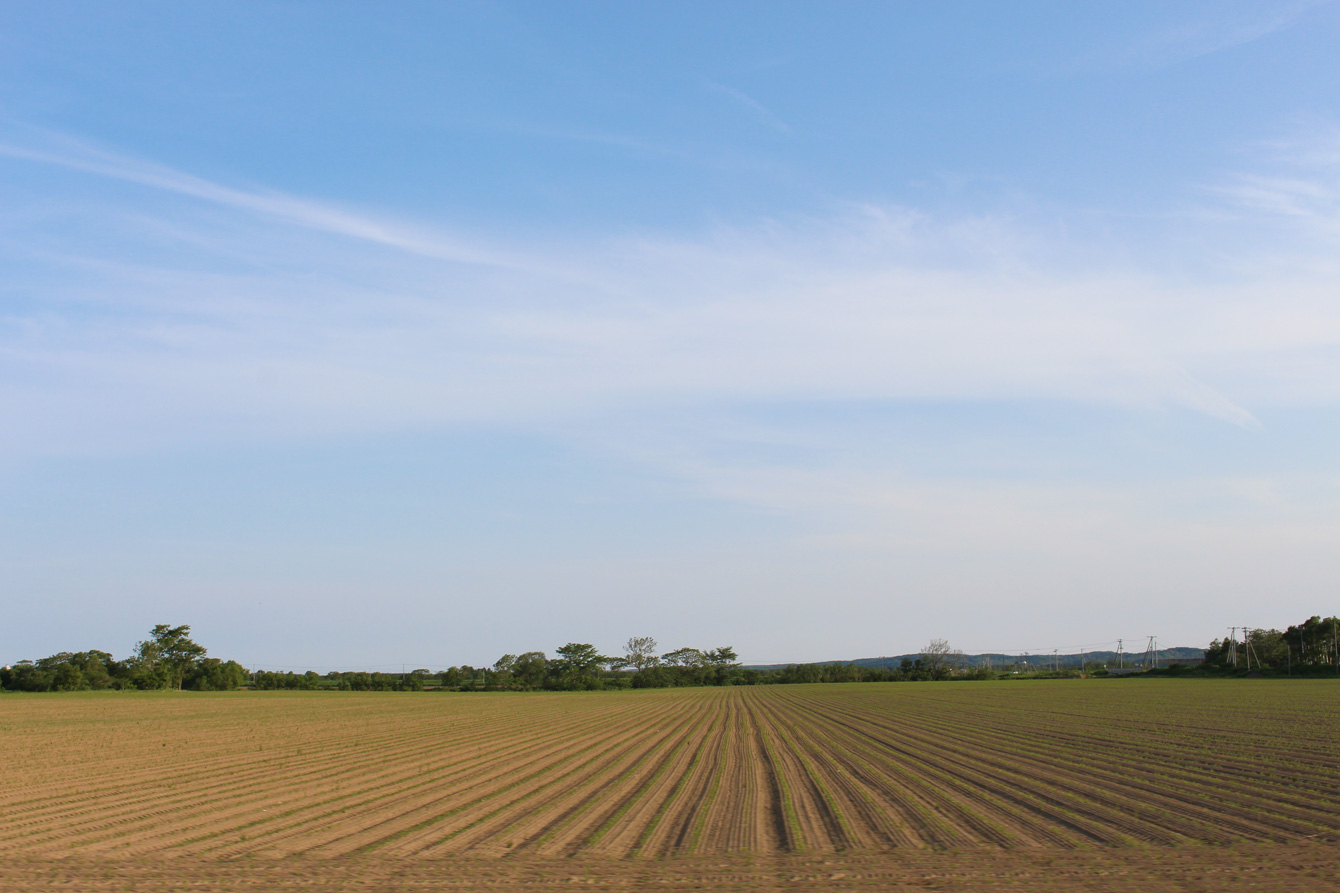 見渡す限りの広大な畑が広がる。