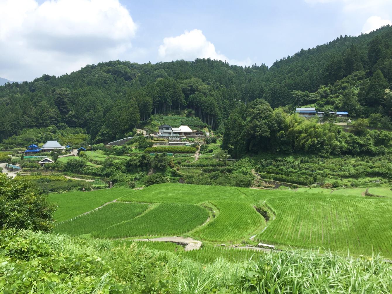 神山町江田地区の棚田の風景。