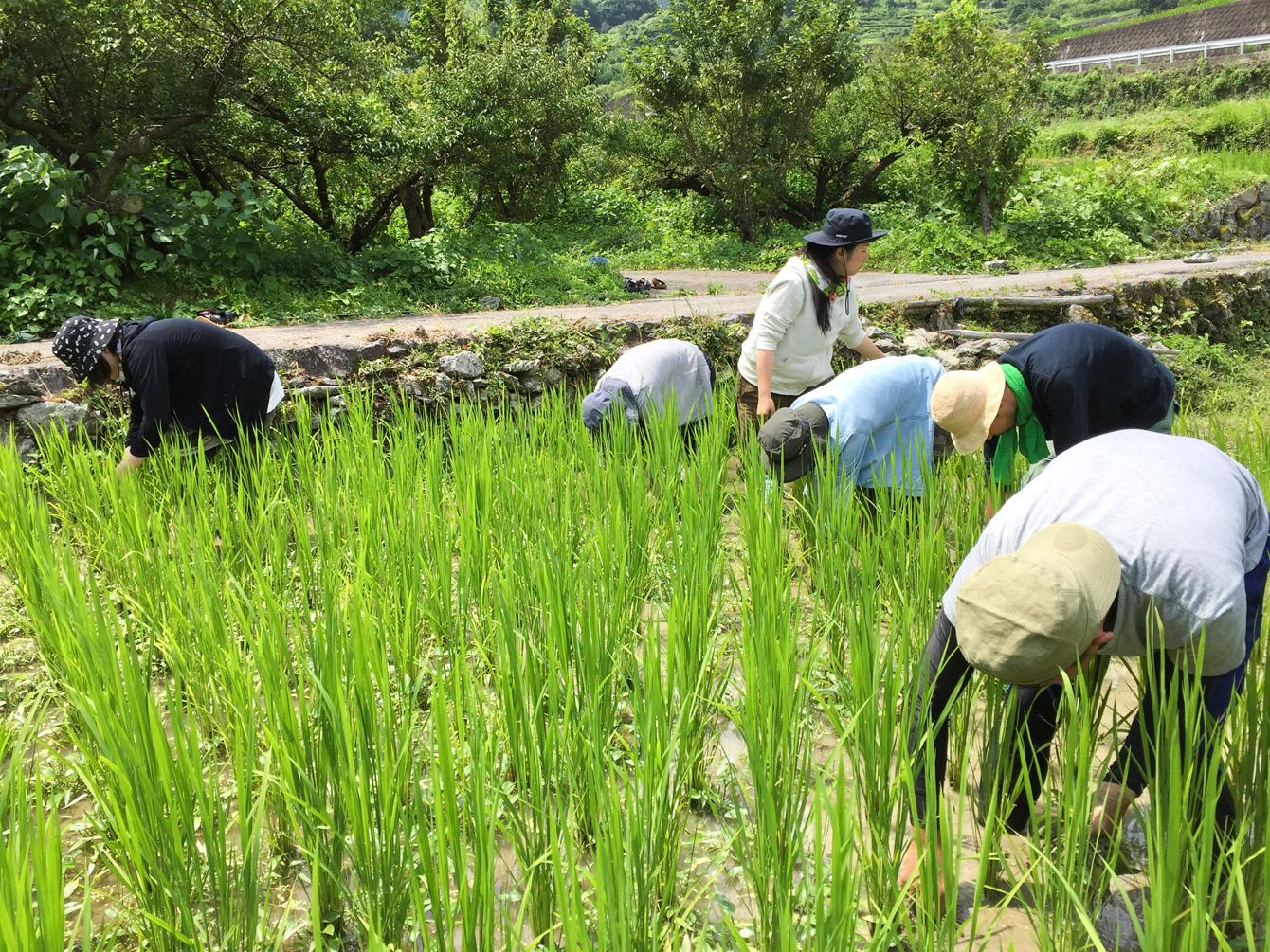素足で土の感触を楽しみながら、除草作業をする塾生達。
