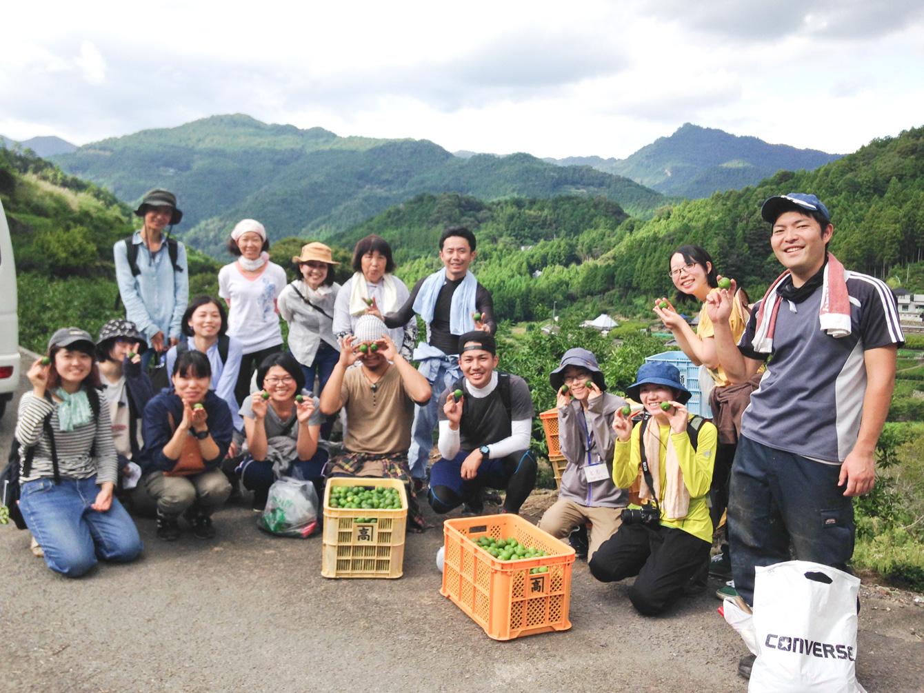 神山町内でお世話になっている農家さんの所へすだち狩りのお手伝い。