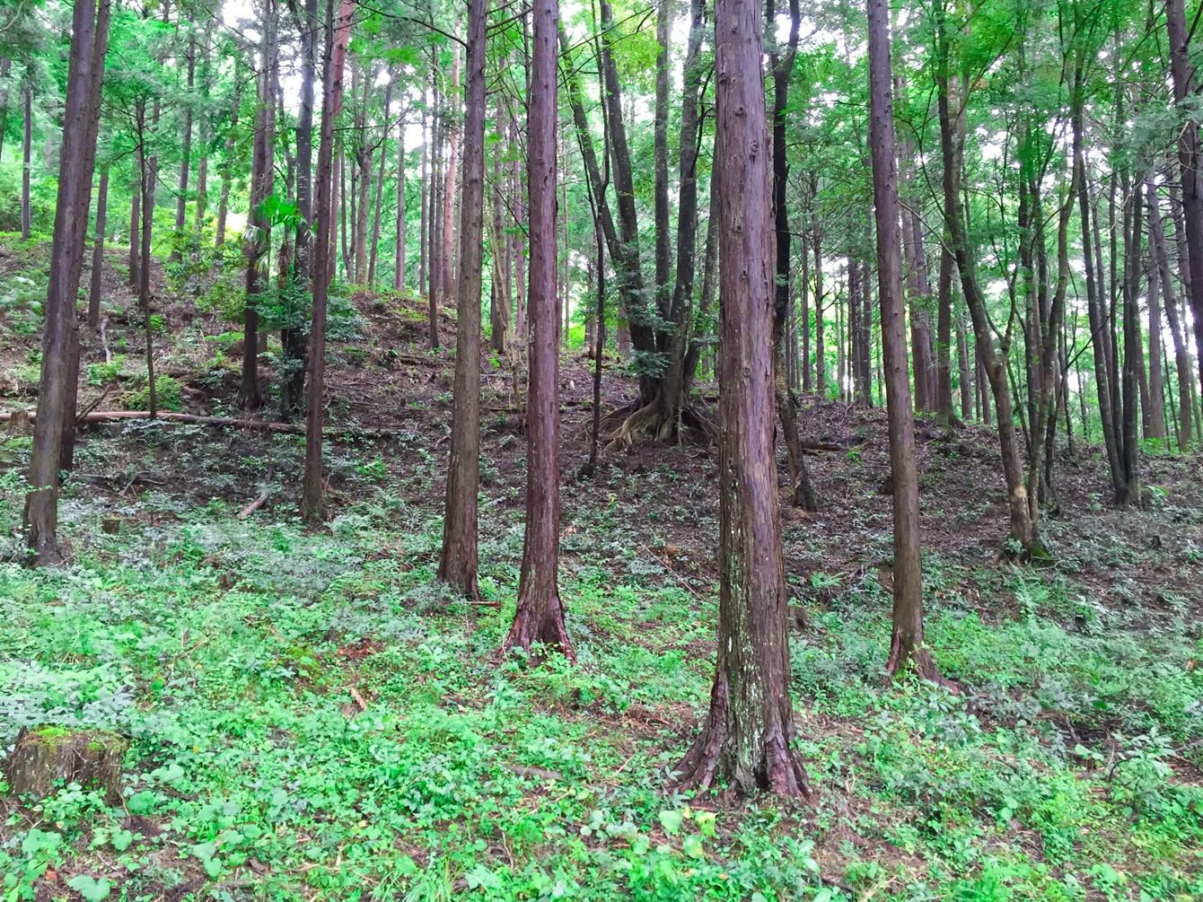 大粟山の山林の様子。手入れがされており山肌は緑色。