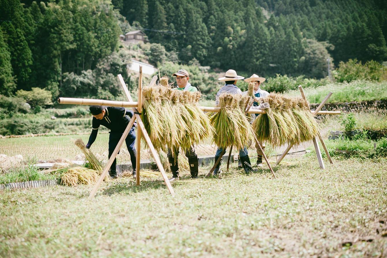 稲は7:3の割合で半分にし、逆さにして交互に竹の竿にかけていく。©Akihiro Ueta