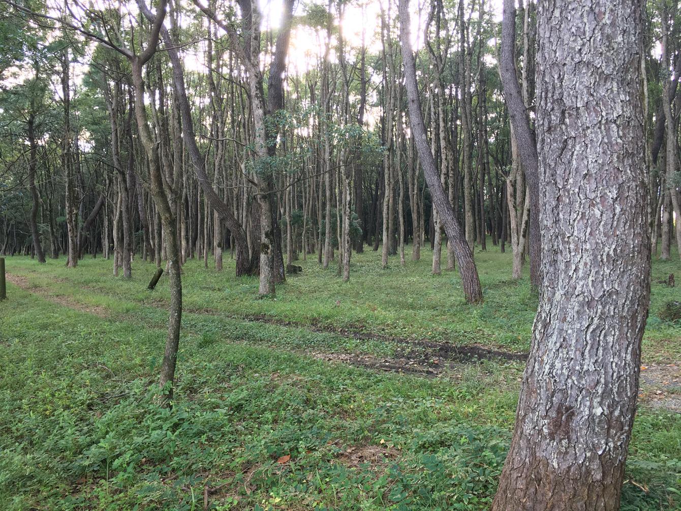松林を抜けると…