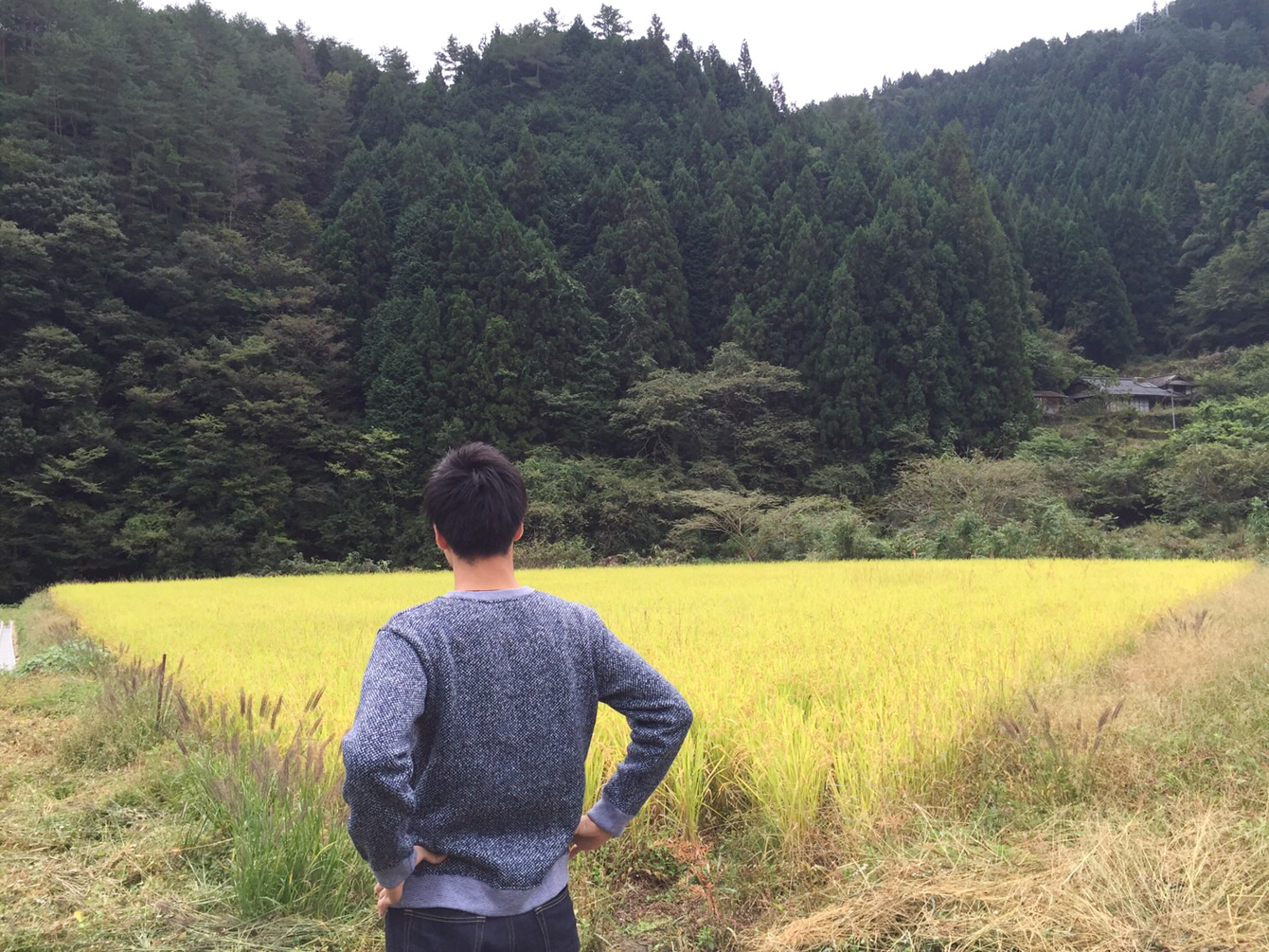 「吉田米」ももうすぐ収穫時期。気合いみなぎる様子。