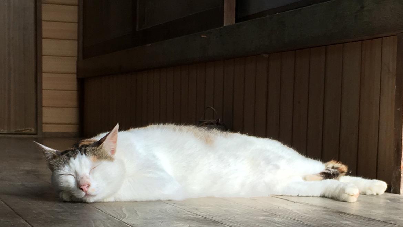 ネコのように生きるには-神山塾の半年間-