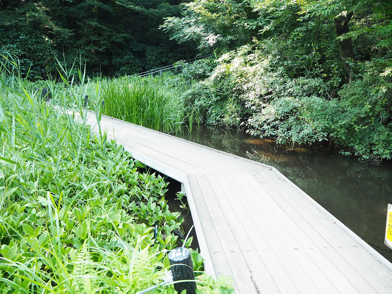 森の中だけではなく、池や沼などもあり歩くだけでも楽しい。
