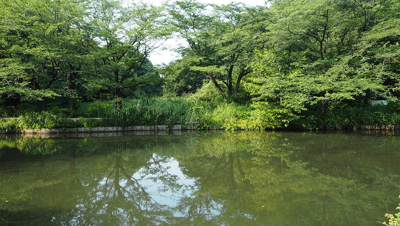 東京の森へ行く