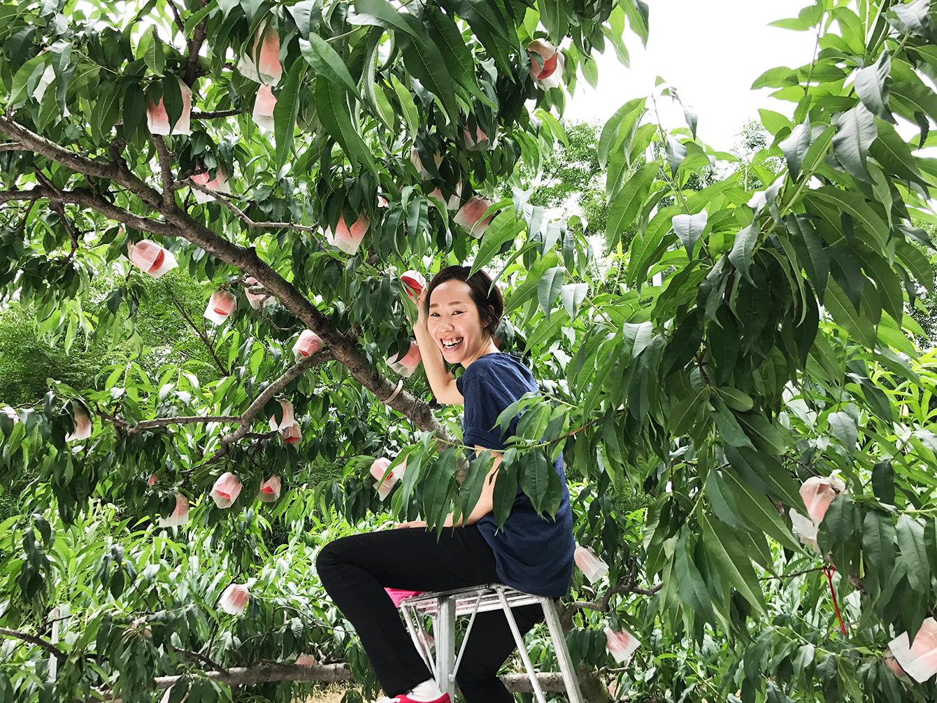 脚立を利用して桃狩りを愉しむ村川さん。