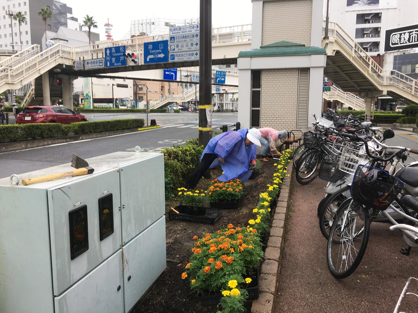 9月16日に行われた花植え会の様子。2万4000株のマリーゴールドを、みんなで手分けして植えました。