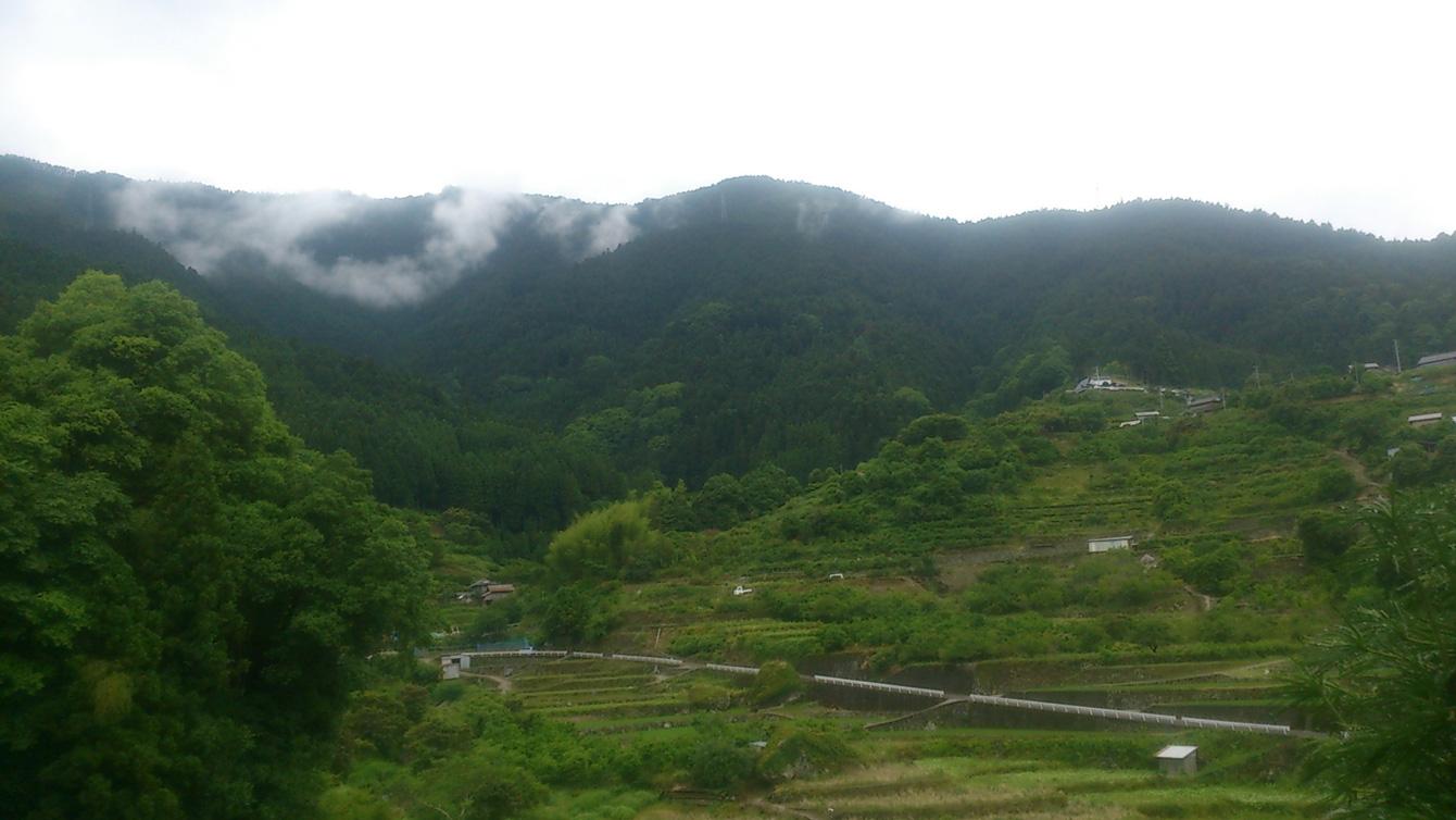 神山町内、棚田が広がる風景。