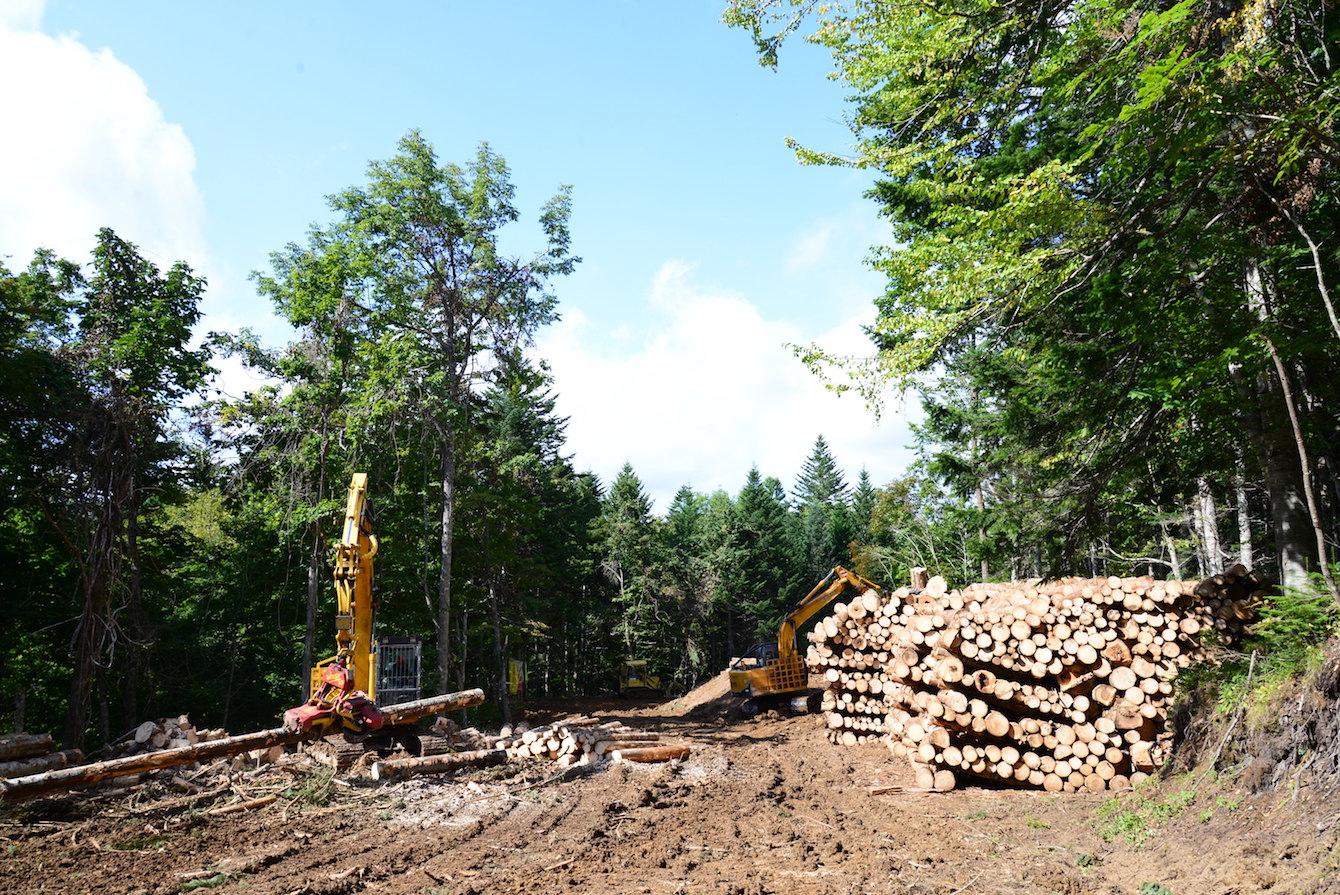 見学先のひとつである北村林業の現場。