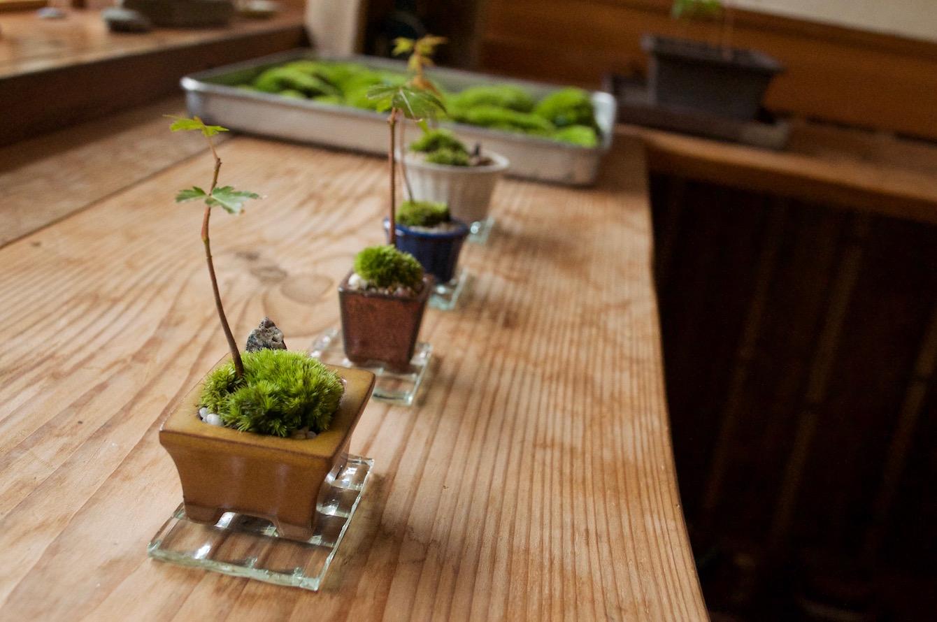 完成した4人の苔庭。