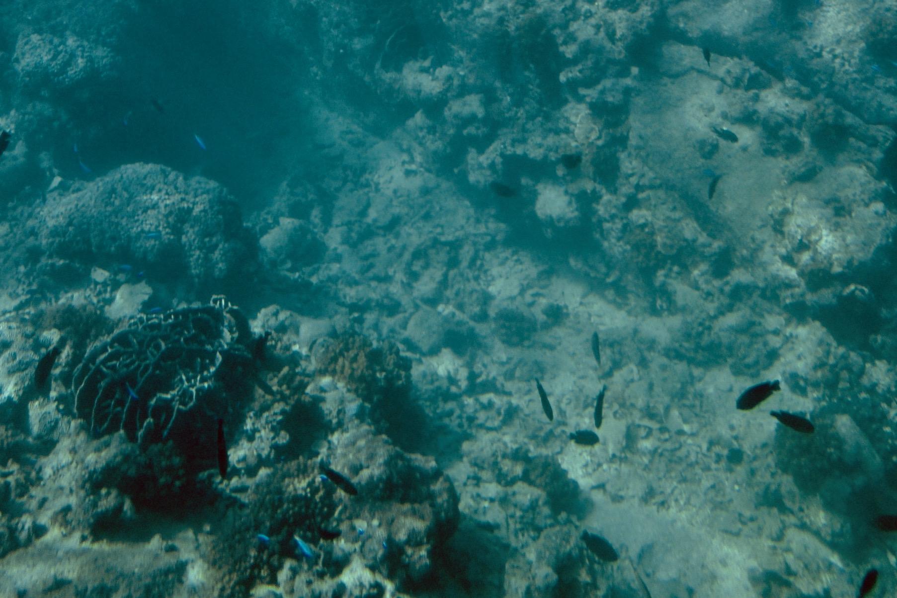 共存する、魚やサンゴなどの海の生き物たち。